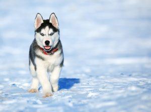Met-je-hond-op-wintersport