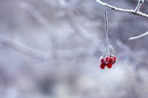 winter-nederland-alpen